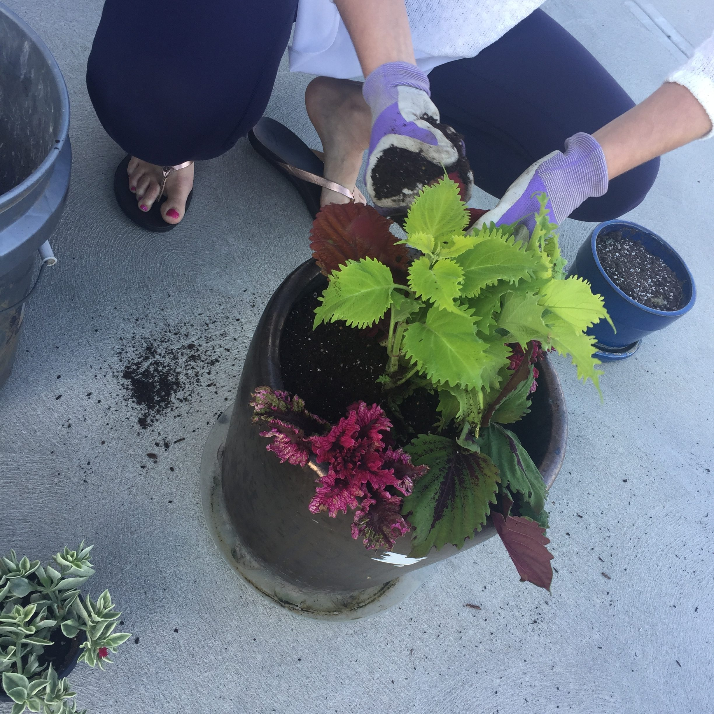 Fall Planting Party- Coleus