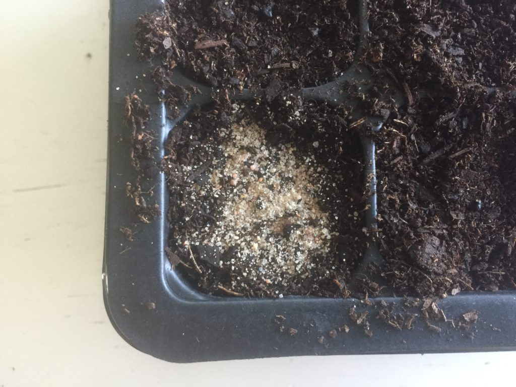 Seedling Tray with Sand