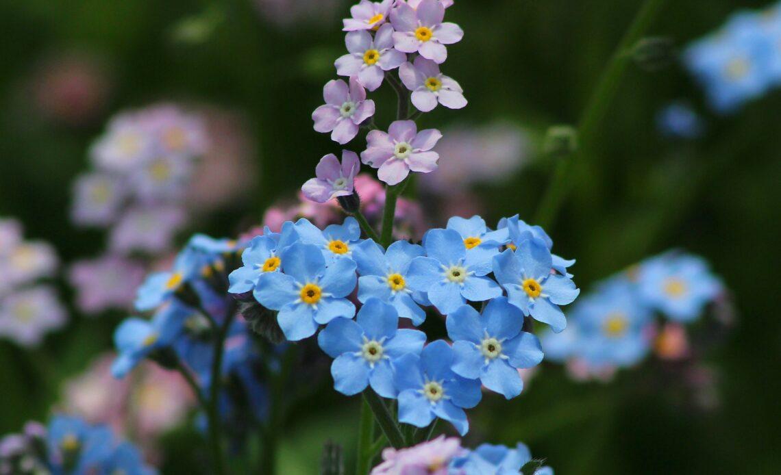 5 ways to screw up your flower garden