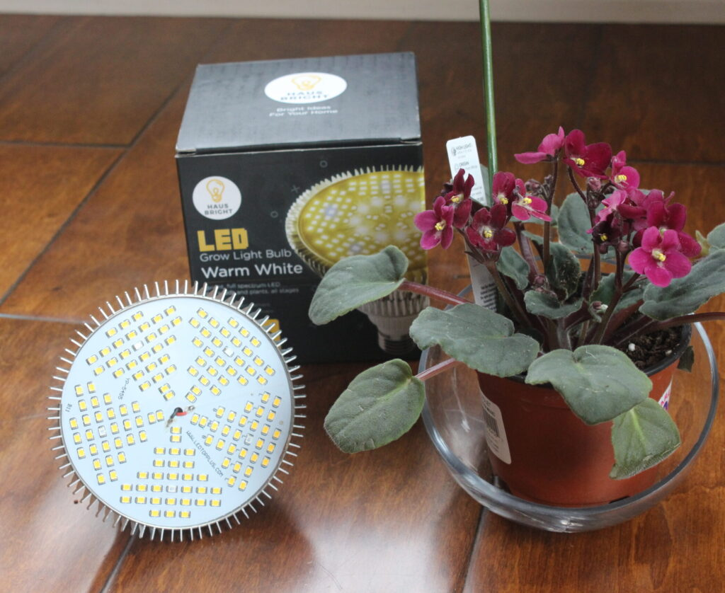 African Violet Bright Haus Grow Light